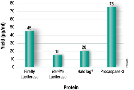 Typical protein yields using TNT T7 Insect Cell Extract Protein Expression System.
