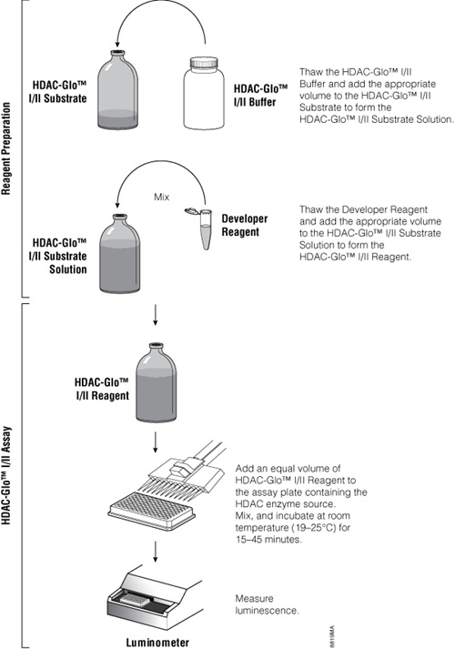 Overview of the HDAC-Glo Assay protocol.